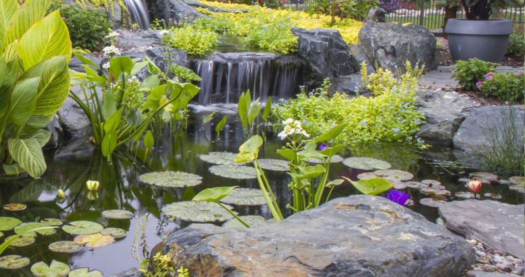 Small plants for small ponds natural impressions for Small garden pond plants